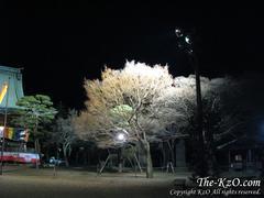 20090101_kzo01.jpg